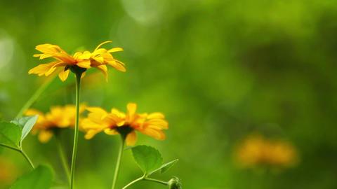 Summer flowers blooming Footage