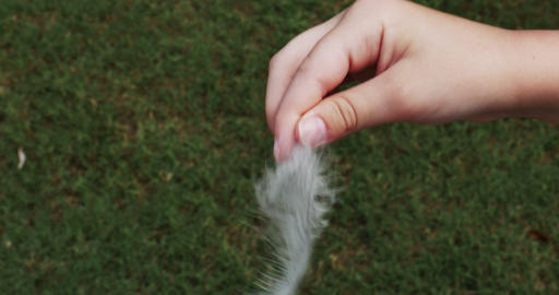 1915 Feather Being Dropped from Hand, 4K Footage