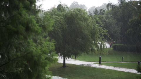 1922 Heavy Rain Storm with Trees, HD Stock Video Footage