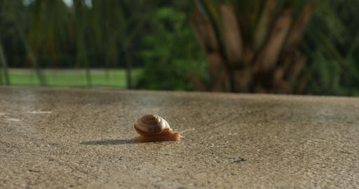 1928 Snail Crawling TImelapse, 4K Footage