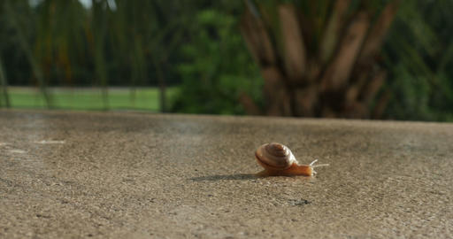 1928 Snail Crawling TImelapse, 4K Stock Video Footage