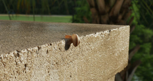 1929 Snail Crawling on Ledge with Palm Trees, 4K Stock Video Footage