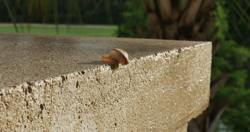 1929 Snail Crawling on Ledge with Palm Trees, 4K Footage
