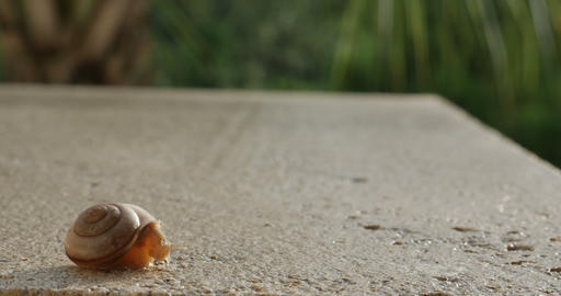 1933 Snail Crawling on Ledge with Palm Trees, 4K Footage