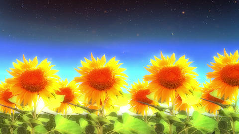 1964 Into Heaven with Sunflowers Glowing, 4K Stock Video Footage
