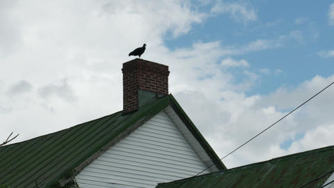 1974 Old Farm House with Turkey Vulture, HD Footage