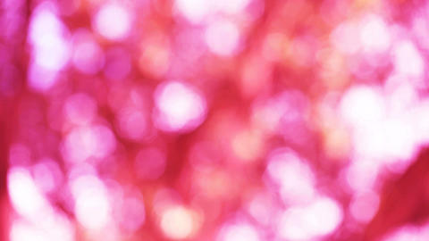 Red And Pink Abstract Background stock footage