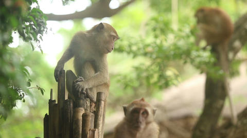 monkey sitting on a branch Stock Video Footage