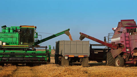 Two Harvesters are Unloading Grain to the Truck Footage