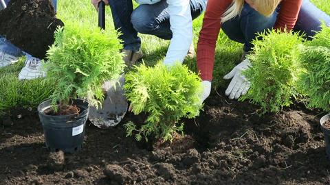 Shrub planting Footage