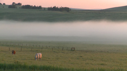 HD2008-7-1-7 sunrise fog cows Footage