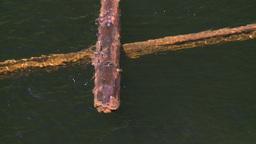 HD2008-7-1-21 lake dead logs float Stock Video Footage
