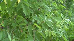 HD2008-7-2-11 rain falling in green garden Stock Video Footage