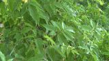 HD2008-7-2-11 Rain Falling In Green Garden stock footage