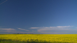 HD2008-6-7-45 canola evening Stock Video Footage
