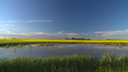HD2008-6-7-49 canola pond evening Stock Video Footage