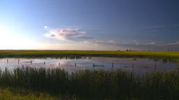 HD2008-6-7-55 canola pond evening Stock Video Footage