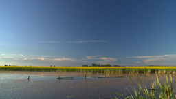 HD2008-7-7-1 pond canola field evening Stock Video Footage