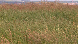 HD2008-7-10-2 wild grass blowing in wind Stock Video Footage