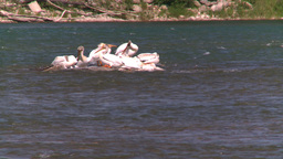 HD2008-7-14-23 pelican on river sunning Stock Video Footage