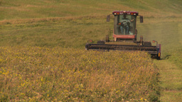 HD2008-7-14-52 tractor harvesting timothy hay Stock Video Footage
