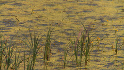 HD2008-7-15-41 prairie marsh Stock Video Footage