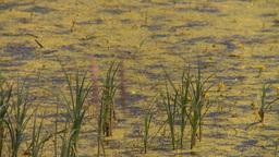 HD2008-7-15-41 prairie marsh Stock Video Footage