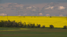 HD2008-7-15-51 canola fields highway Stock Video Footage