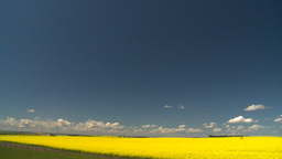 HD2008-7-15-57 canola fields Stock Video Footage