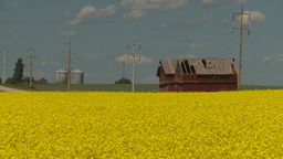 HD2008-7-15-59 canola fields Stock Video Footage