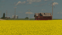 HD2008-7-15-59 canola fields Stock Video Footage