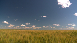 HD2008-7-15-73 TL wheat Stock Video Footage