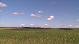 HD2008-7-16-3 wheat Footage