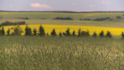 HD2008-7-16-5 canola wheat Stock Video Footage