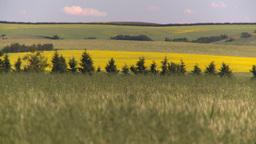 HD2008-7-16-5 canola wheat Stock Video Footage