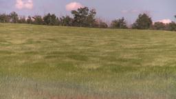 HD2008-7-16-11 wavy barley Stock Video Footage
