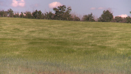 HD2008-7-16-11 wavy barley Stock Video Footage