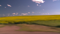 HD2008-7-16-19 canola drive Stock Video Footage