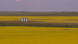 HD2008-7-16-63 canola fields Stock Video Footage