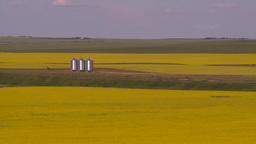HD2008-7-16-63 canola fields Stock Video Footage