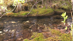 HD2008-6-3-39 mossy stream Stock Video Footage