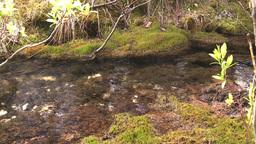 HD2008-6-3-39 mossy stream Footage