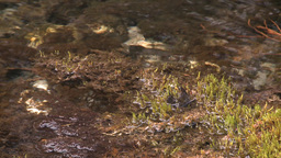 HD2008-6-3-41 mossy stream Footage