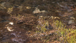 HD2008-6-3-41 mossy stream Stock Video Footage