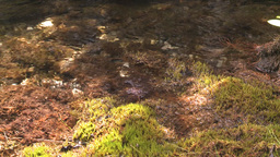HD2008-6-3-43 mossy stream Stock Video Footage