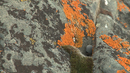 HD2008-6-3-57 orange lichen rock river Stock Video Footage