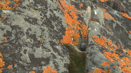 HD2008-6-3-57 orange lichen rock river Footage