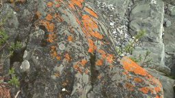 HD2008-6-3-57 orange lichen rock river Stock Video Footage