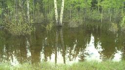 HD2008-6-3-65 swamp marsh Stock Video Footage