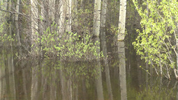 HD2008-6-3-67 swamp marsh Stock Video Footage